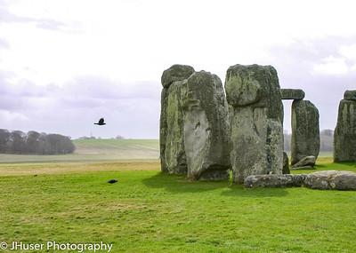 Bird flying by Stonehenge