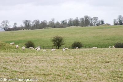 Sheep around Stonehenge