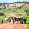 Friendly Equine Sentinels in the Badlands Pine Forest