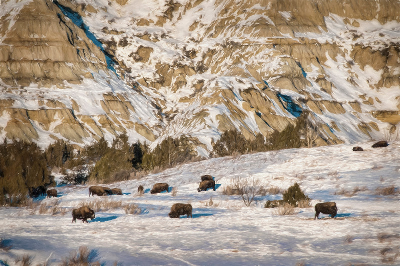 Winter Bison North Unit