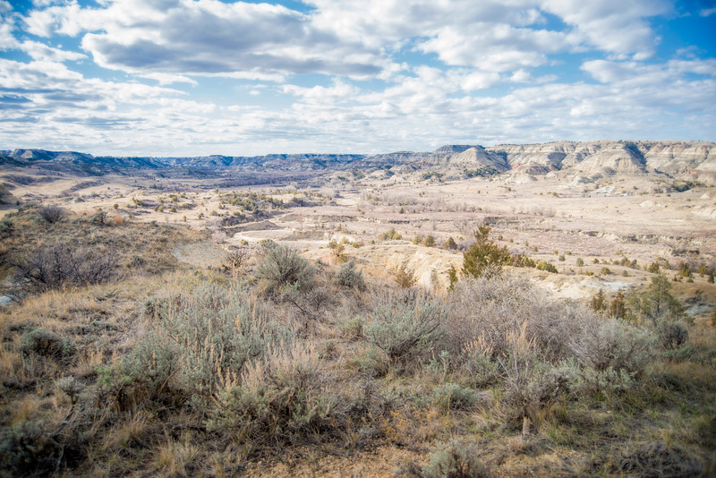 """Sage and desert.  It's sparse grazing for livestock here in the middle part of the North Dakota Badlands. <br />  Click """"buy"""" to own this print or other products from this image (mouse pad, coffee cup, etc)."""