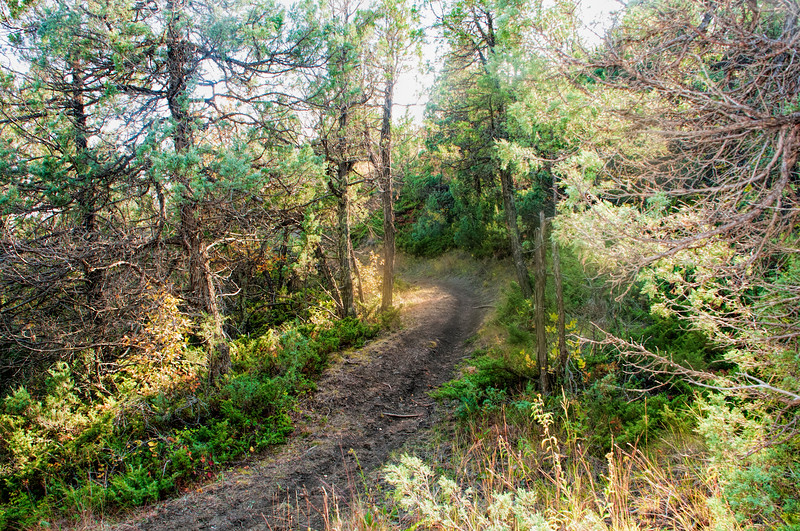 """The trail through the trees to Devil's Pass.<br /> <br /> You can collect this image as wall decor, coffee mug or other product.  Just click """"buy"""" to browse and shop."""