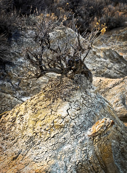 A harsh climate can make for some intriguing textures and shapes in the badlands of North Dakota.