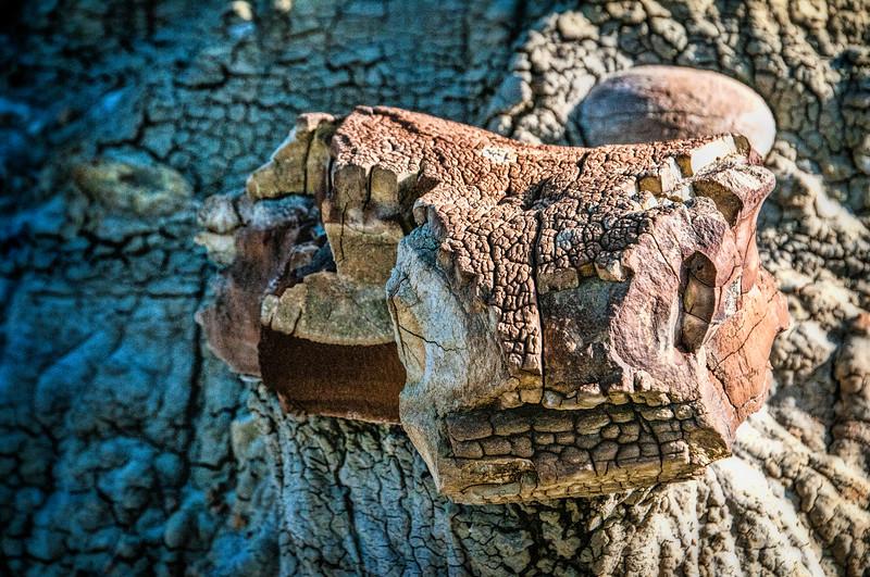 rock head snake