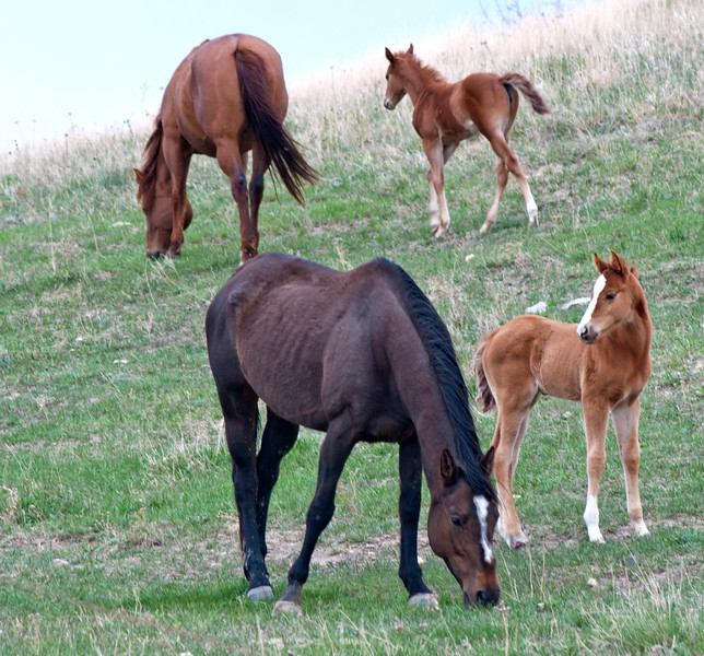 Two mares, two colts