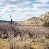 Badlands Prehistoric