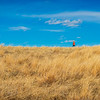 yellow grasslands blue sky