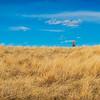 yellow grasslands blue sky