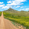 Yellow Clover and Gravel Road on Custer's Trail in the North Dakota Badlands