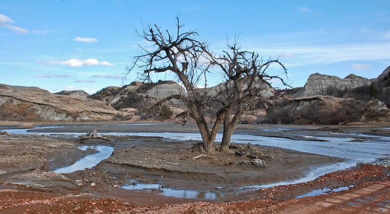 Badlands Oasis