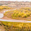 Yellow cottonwood trees line the Little MIssouri River in the NOrth DAkota Badlands.