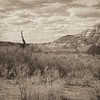Sepia  Badlands Prehistoric