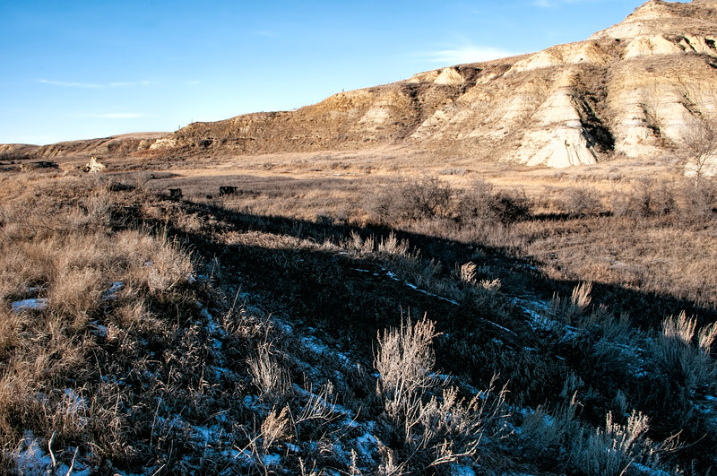 """The far east end of the Buffalo Gap Guest Ranch is cattle country. See the Angus in the tall brush?<br /> <br /> You can own this image as wall decor, mouse pad, coffee cup or other product.  Just click """"buy"""" to browse the products you can buy here."""