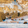 "A warm winter day is still cold for most of us, but not for the bison of the Theodore Roosevelt National Park near Watford City.<br /> <br /> You can own this print. Check out all the bison images you can buy as prints or as keepsakes such as coffee cups, mousepads, refrigerator magnets.  Click ""buy"" to browse."
