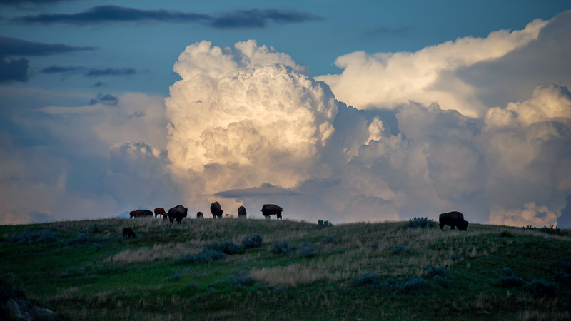 Storm on the Horizon and the Bison Graze