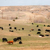 Sidney Cattle Country