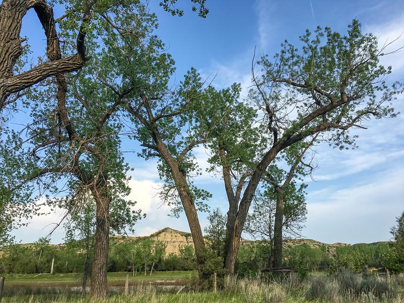 Cottonwoods Over the Home of Theodore Roosevelt's Elkhorn Ranch, North Dakota