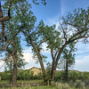 Cottonwoods Over the Home of Theodore Roosevelt's Elkhorn Ranch, North Dakota