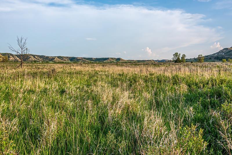 Tranquil Grasslands Along the Little Missouri River, Theodore Roosevelt's Elkhorn Ranch Home, North Dakota
