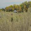 Sage at the Elkhorn Ranch Campground, North Dakota