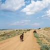 Cattle on the Open Range, South of Elkhorn Ranch, North Dakota