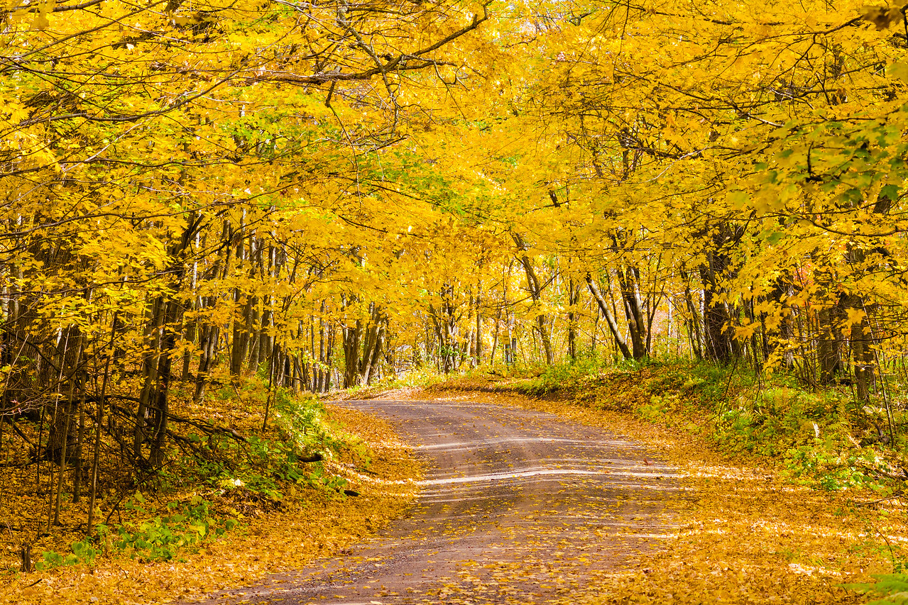 Fall Color. All rights reserved by Saibal Ghosh.