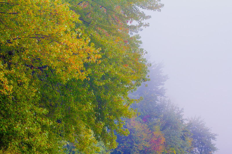 Early Fall color - Foggy  morning