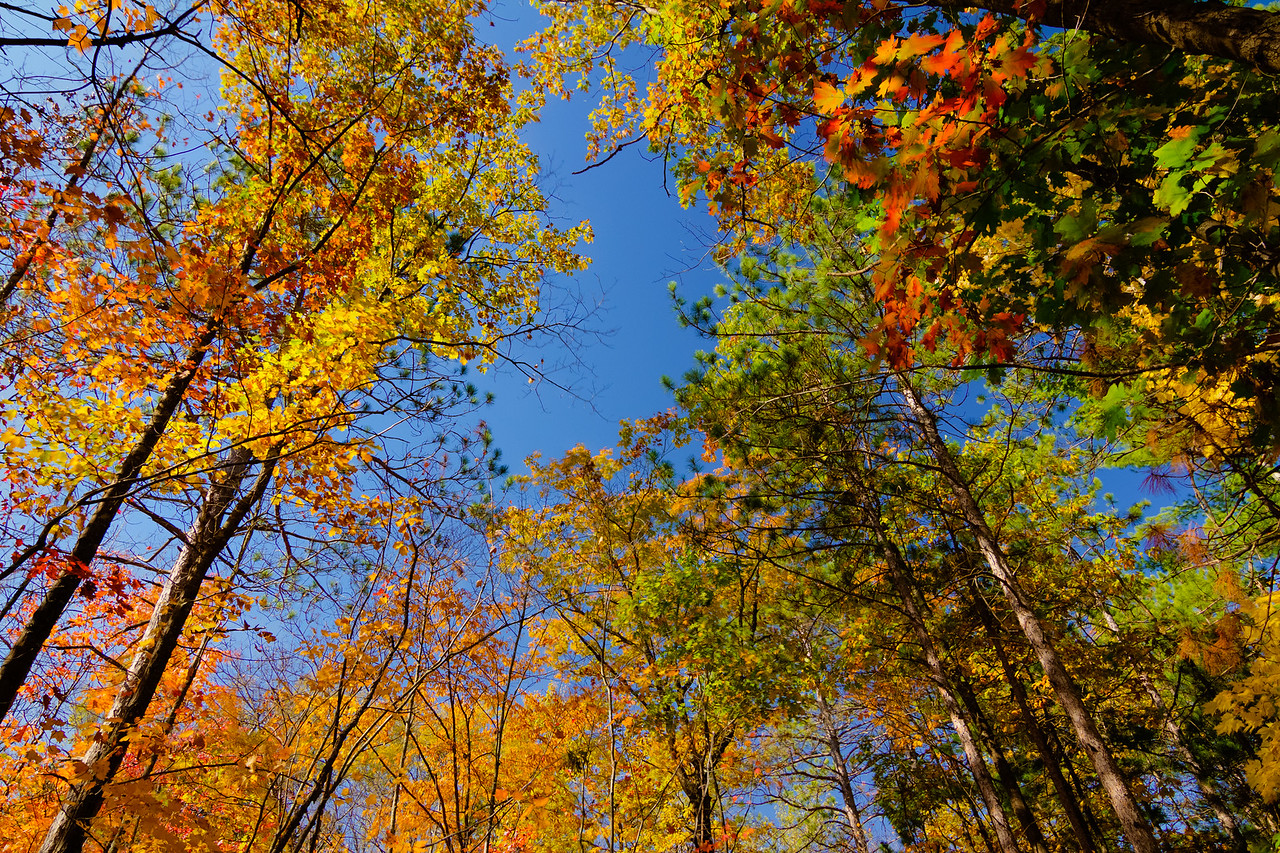 Fall Color at Banning State Park Sandstone, MN