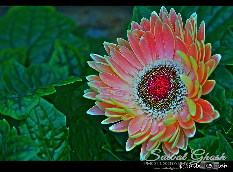 All Copyrights Reserved by Saibal Ghosh.