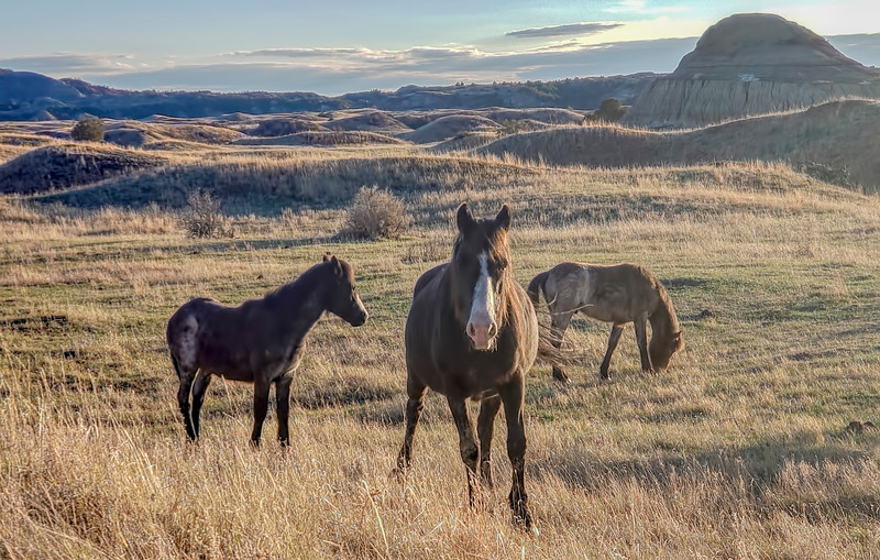 """A trio of wild horses in the south unit of the Theodore Roosevelt National Park at Medora.<br /> <br /> <a href=""""https://wp.me/p8zmWn-3Kz"""">https://wp.me/p8zmWn-3Kz</a>"""
