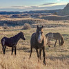 "A trio of wild horses in the south unit of the Theodore Roosevelt National Park at Medora.<br /> <br /> <a href=""https://wp.me/p8zmWn-3Kz"">https://wp.me/p8zmWn-3Kz</a>"
