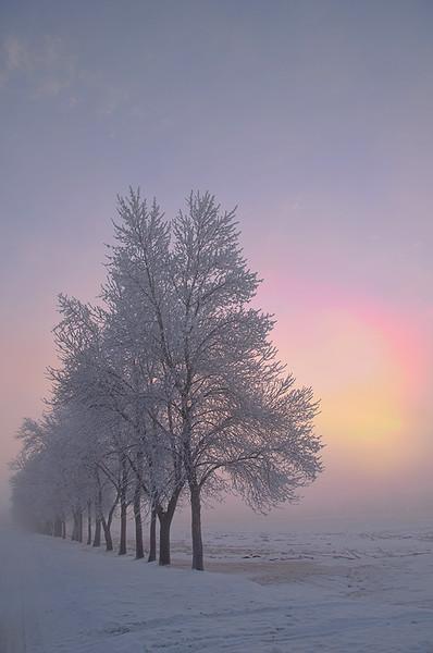 Sunrise through the tree row and fog