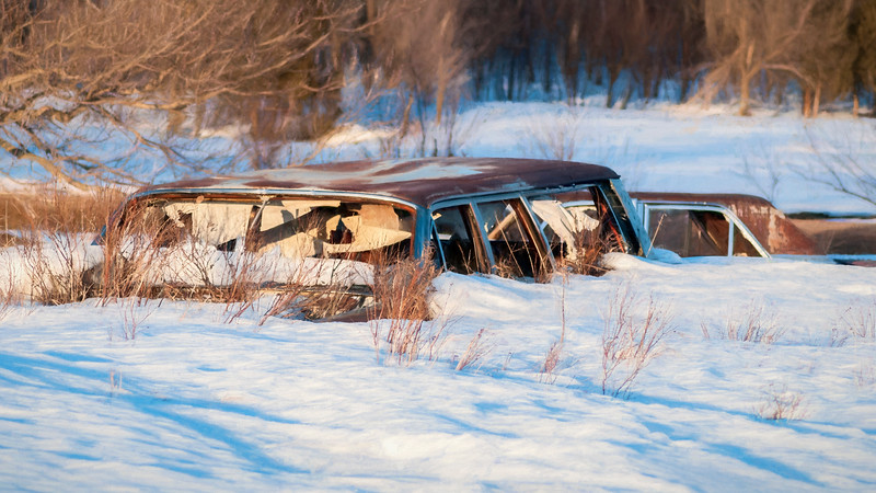 After a particularly snowy winter, the spring melt reveals car tops in a pasture that were buried in the snow.