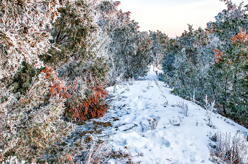 """A trail through the frosty trees along a hill in Burleigh County.<br /> <br /> You can add this image to your collection of prints on display.  Or as a keepsake. Just click """"buy"""" to browse and purchase.  Thanks!"""