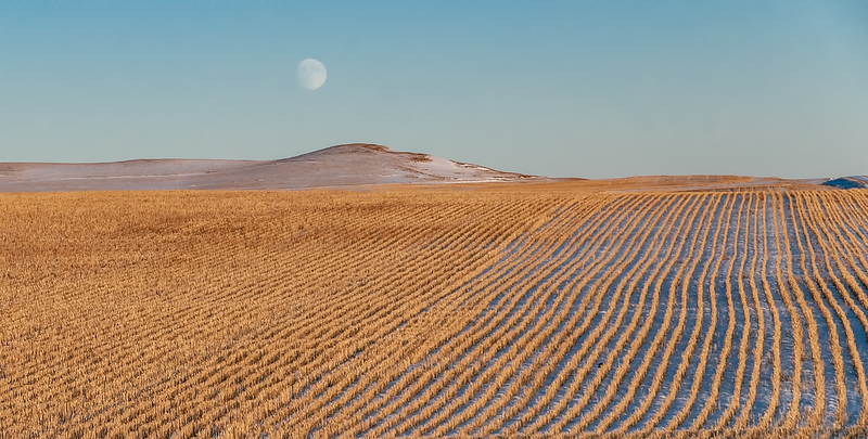 Winter moon over stubble field