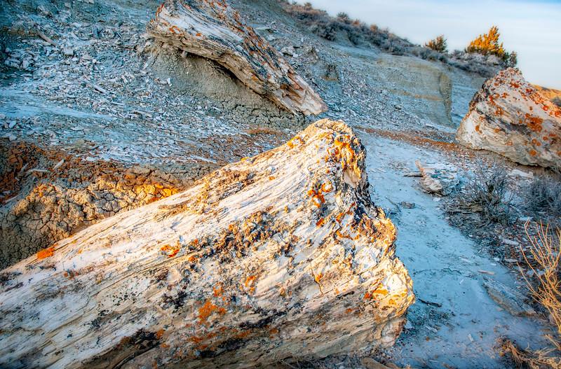 Stump closeup