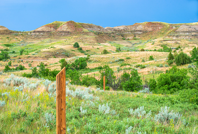 spring green at Petrified Forest Trail