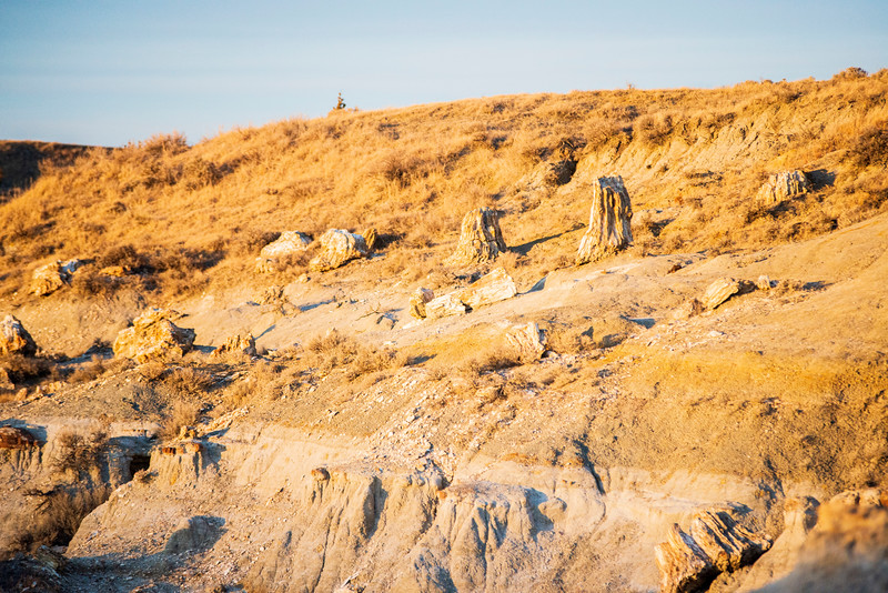 Stumps remaining in Petrified forest