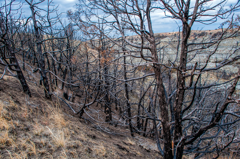 """Wildfire in 2017 left a scar that will take years to erase.<br /> <br /> You can own this image. Click """"buy"""" to see the options from wall prints to coffee mugs."""