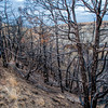 "Wildfire in 2017 left a scar that will take years to erase.<br /> <br /> You can own this image. Click ""buy"" to see the options from wall prints to coffee mugs."