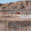 "A band of wild horses graze in a canyon of the Theodore Roosevelt National Park South Unit. <br /> <br /> You can own this image.  Not sure what you like? Just click ""buy"" and you'll be taken to the catalog where you can browse wall decor and other products for Christmas gifts."