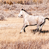 "One of the wild horses runs by at the South Unit of the Theodore Roosevelt National Park.<br /> <br /> You can own this image.  Not sure what you like? Just click ""buy"" and you'll be taken to the catalog where you can browse wall decor and other products for Christmas gifts."