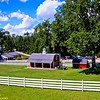 Evergreen Miniature Horse Farm in Livingston, NJ