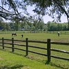 Horse Farm in Morris County