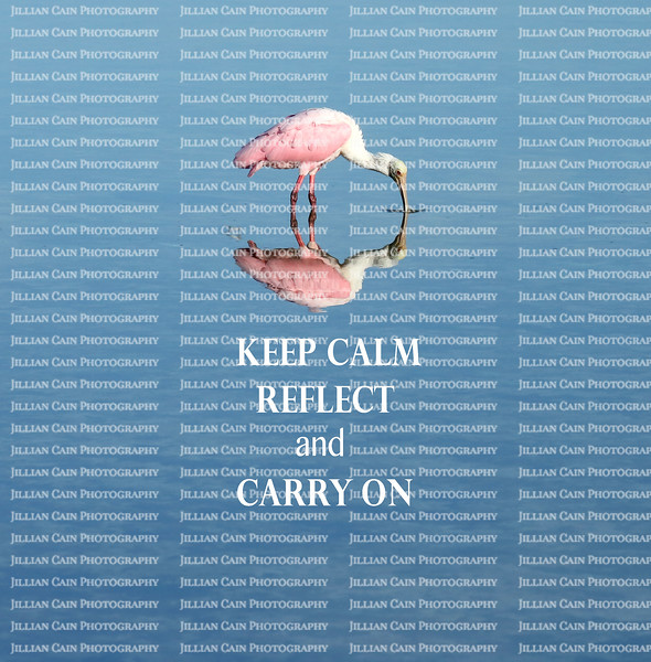 Roseate Spoonbill is reflected in a fresh water pond as it takes a drink of water. The words Keep Calm, REFLECT, and Carry on, are in white, centered below the spoonbill.