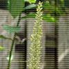 Hummingbird drinking nectar from a bromeliad bloom