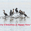 A group of double-crested cormorant on driftwood form a curved arch above the words Merry Christmas & Happy New Year in red.