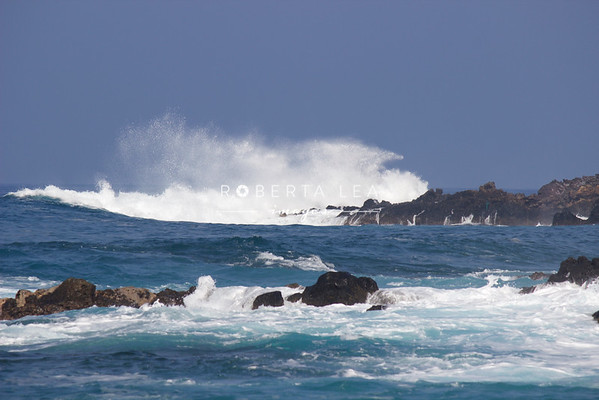 Just a Swell! Big Island Hawaii