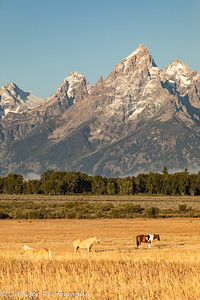 Vertical - horses in front of Teton mountains
