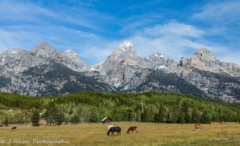 Horses in field in front of Teton Mountains